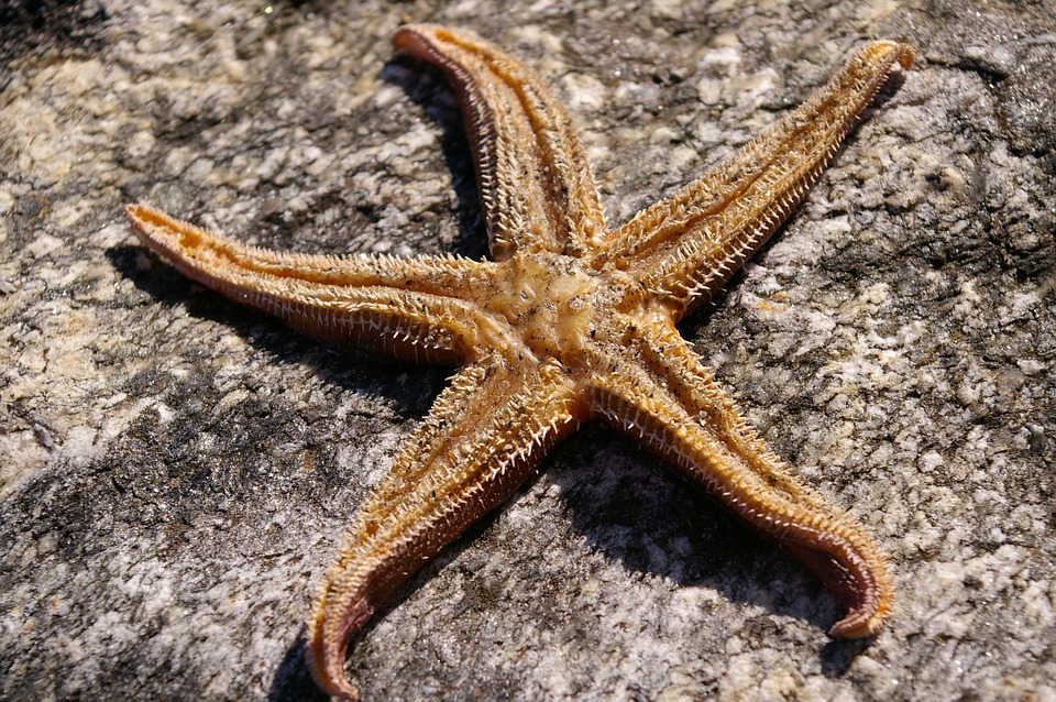 Starfish, Star, Dried, Structure, Air Drying, Surface