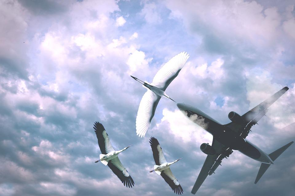 Airplane, Flight, Sky, Aircraft, Wing, Outdoors, Cloud
