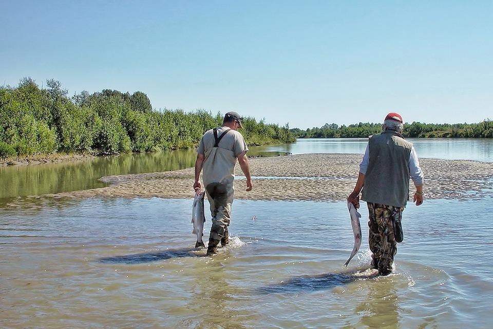 Alaska, Salmon, Fish, Fishing, Wildlife, River, Nature
