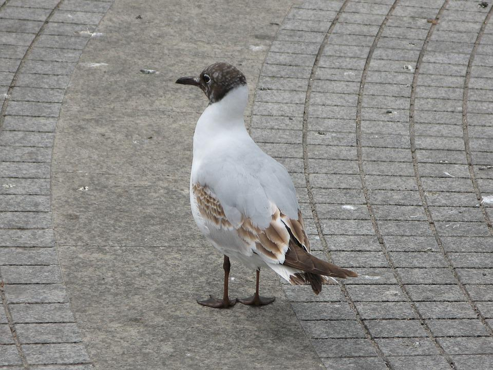 Seagull, Bird, Sea, Gulls, Summer, Nature, Albatross
