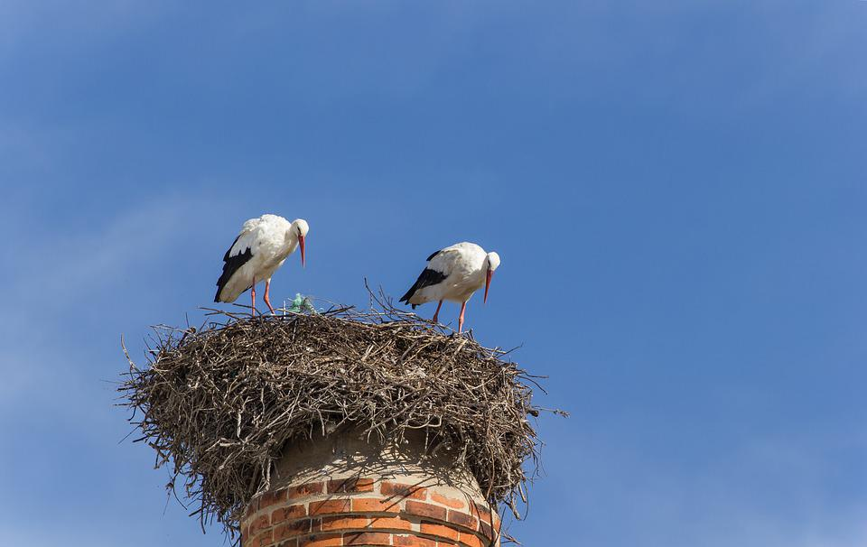 Storks, Chimney, Algarve, Portugal, White Stork