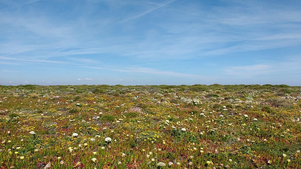 Cape, Saint, Vincent, Portugal, Algarve, Sky, Flowers