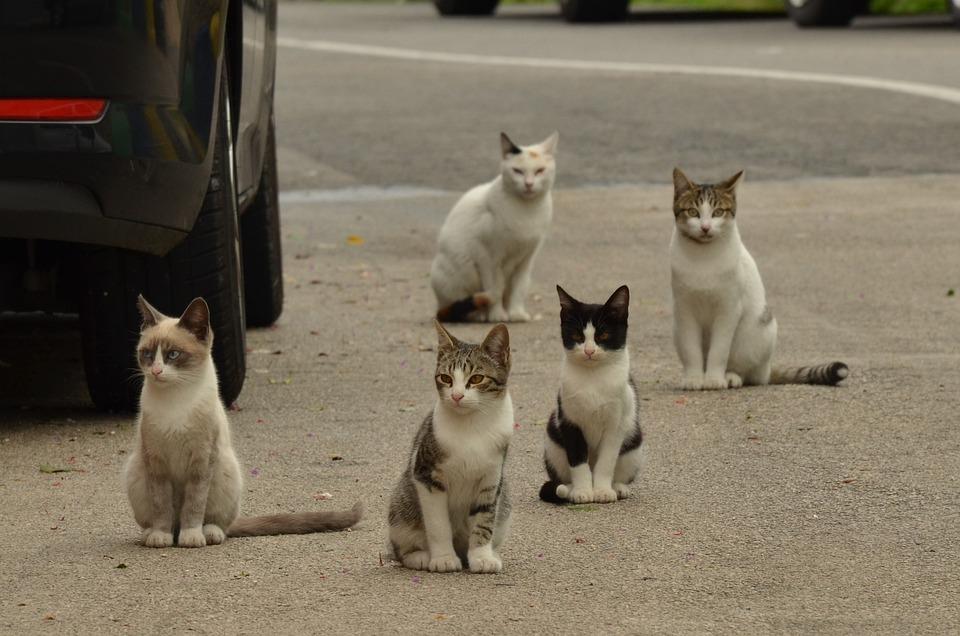 Cat, Kitten, Alley Cat, Pet, Street