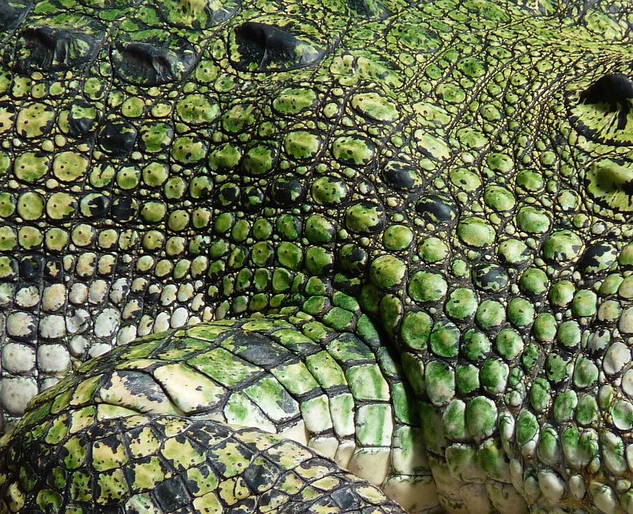 Crocodile, Scale, Reptile, Animal, Alligator, Dangerous