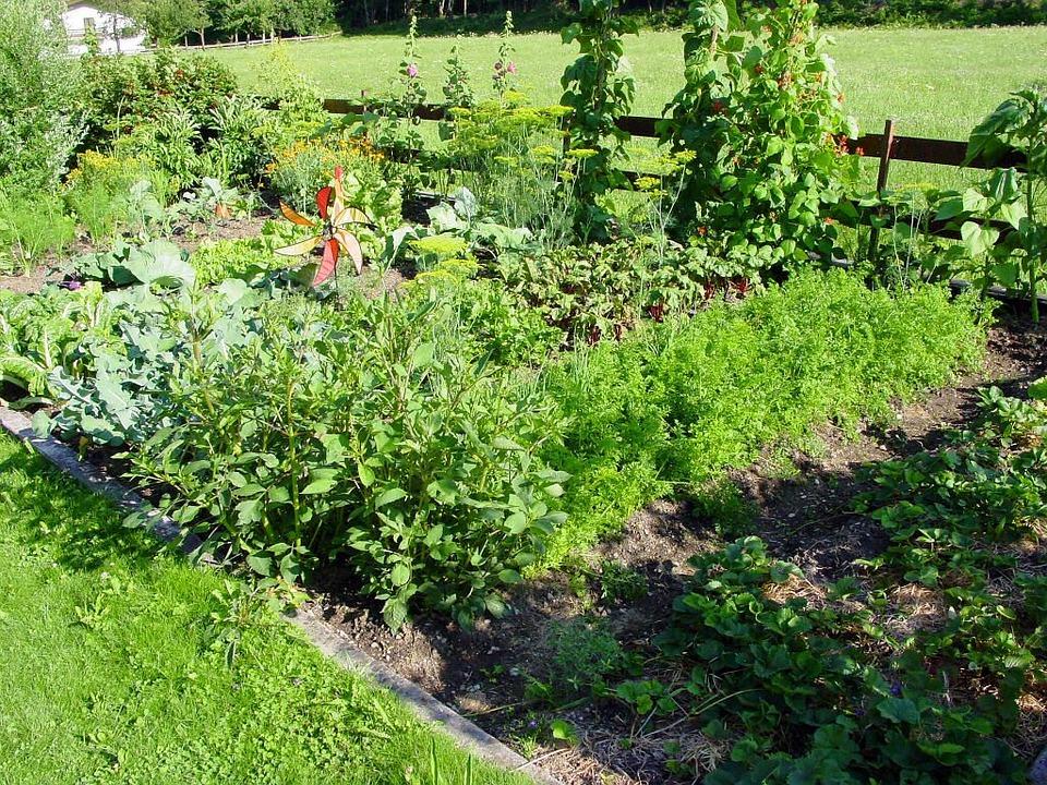 Allotment, Garden, Beete, Plant, To Farm