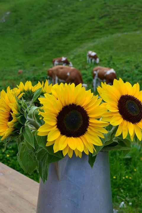 Sunflower, Alm, Bouquet, Summer, Flowers, Bloom