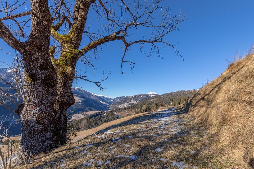 Lesachtal, Nature, Tree, Alpine, Alm, Agriculture