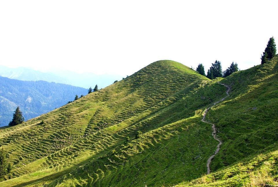 Alm, Greened, Meadow, Gary Long, Oberstdorf, Bavaria