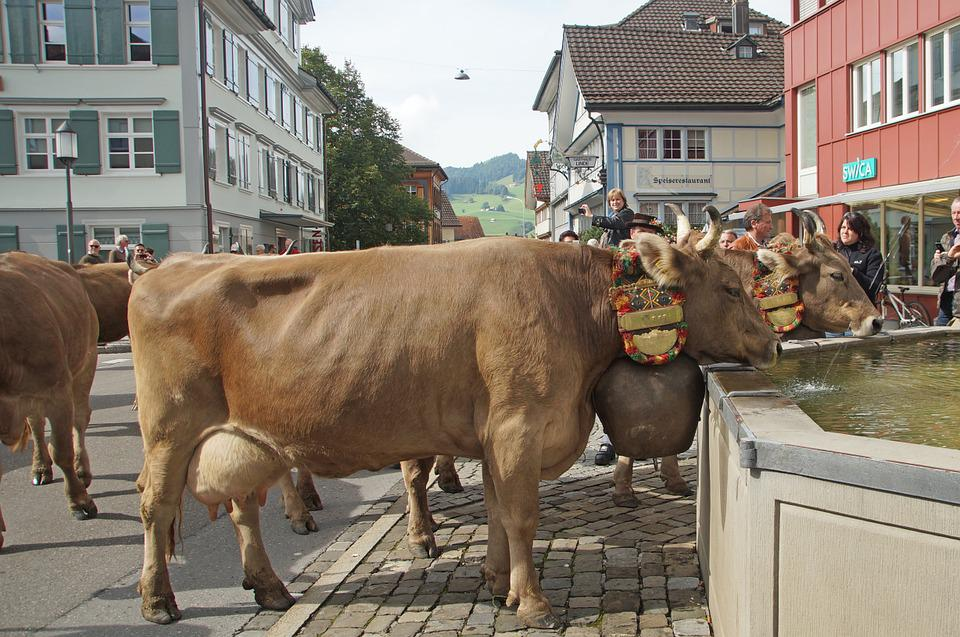 Almabtrieb, Switzerland, Appenzell, Cows, Tradition