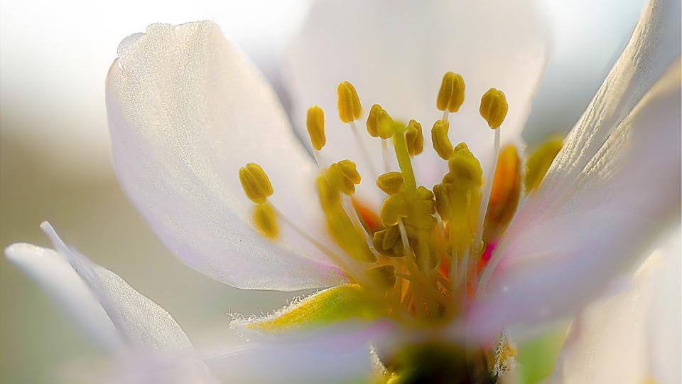 Almond Blossom, Spring, Free Photos