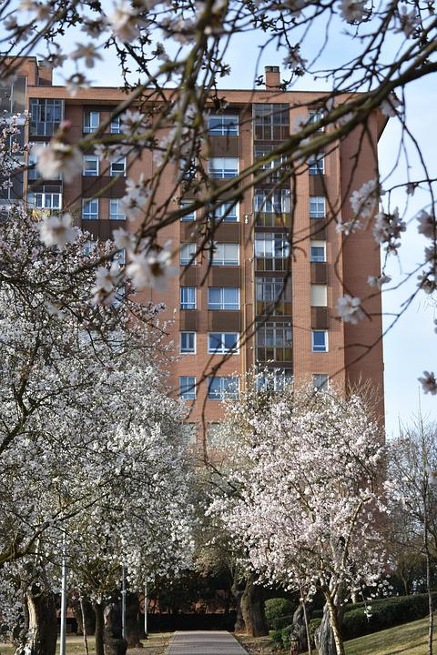 Almond Trees, Almond Tree, Flower, Spring, Almonds