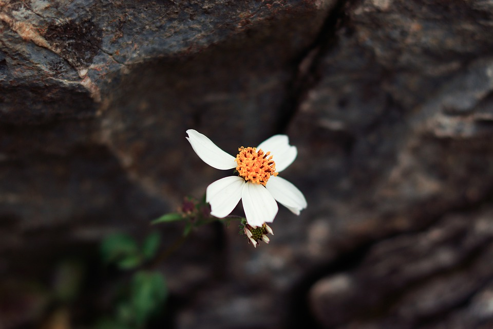 Flower, Nature, Alone