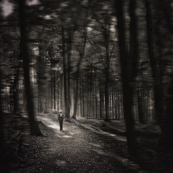 Forest, Gloomy, Mood, Alone
