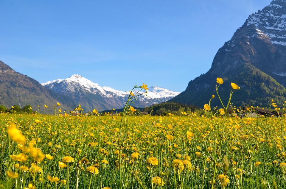 Spring, Glarus, Spring Meadow, Bloom, Mountains, Alpine