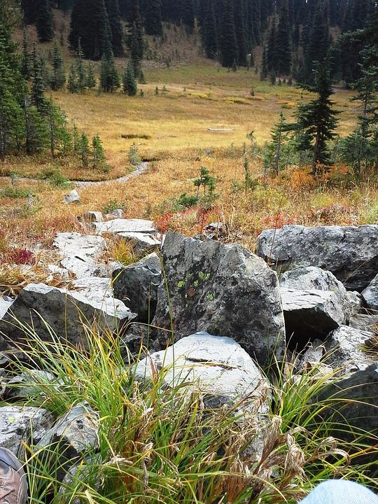 Alpine Meadow, Cascade Mountains, Washington