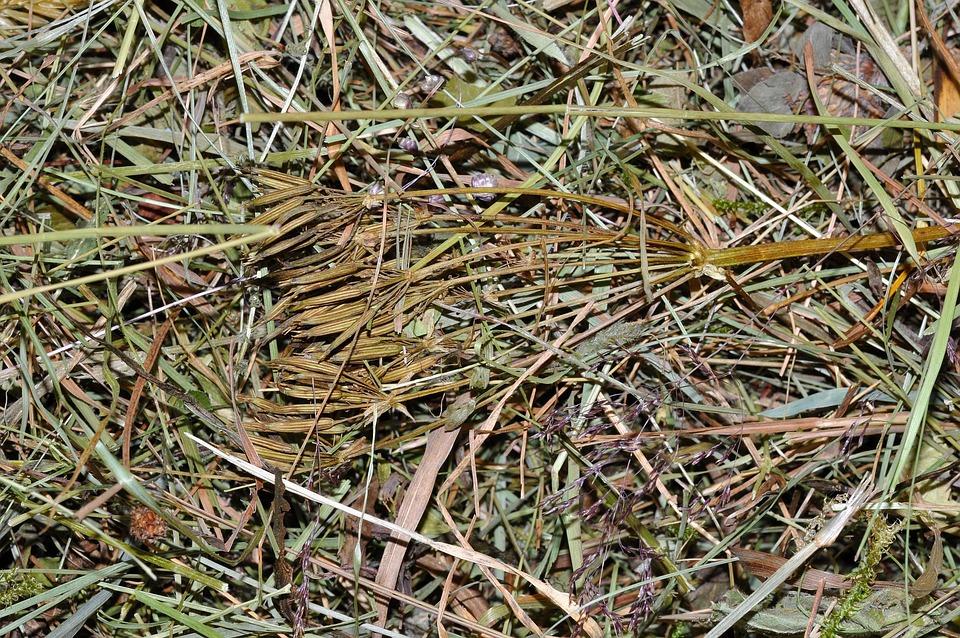 Hay, Grass, Alpine Meadows, Pet Food, Close