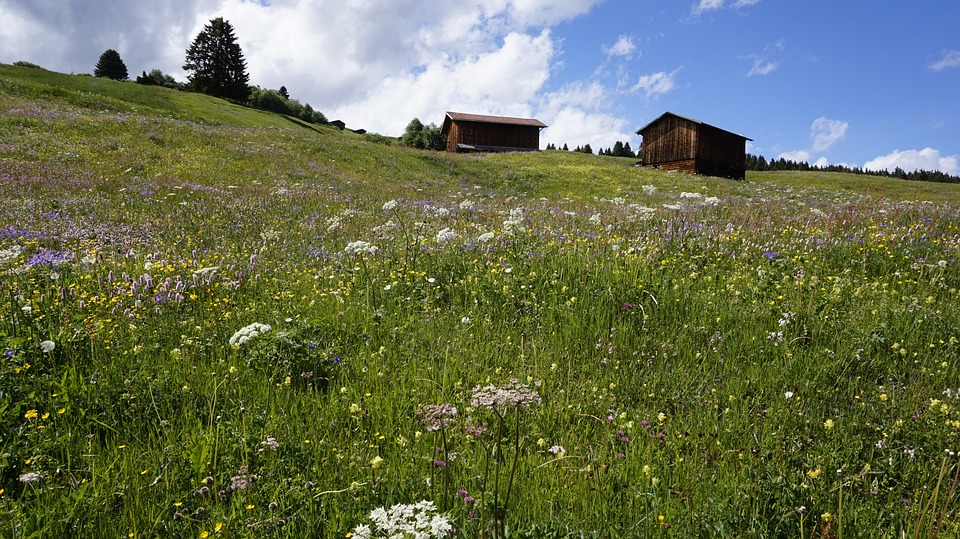 Switzerland, Meadow, Alpine, Hut, Graubünden, Farm