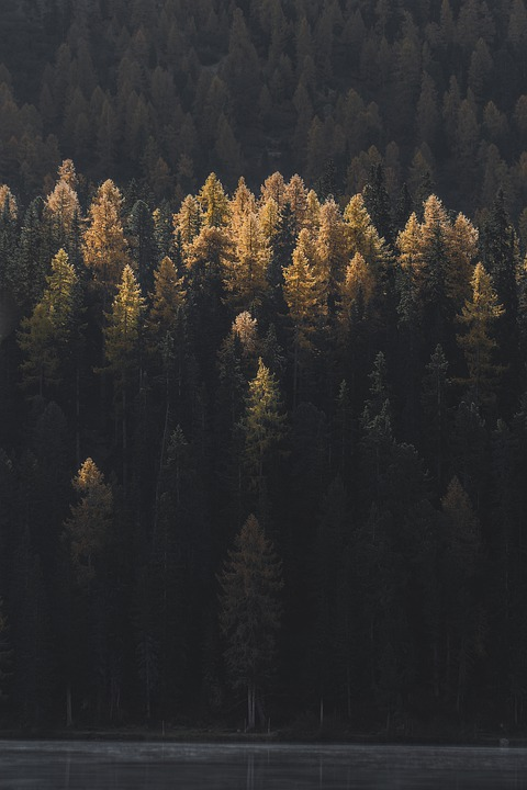 Trees, Forest, Mountain, Woods, Woodland, Nature, Alps