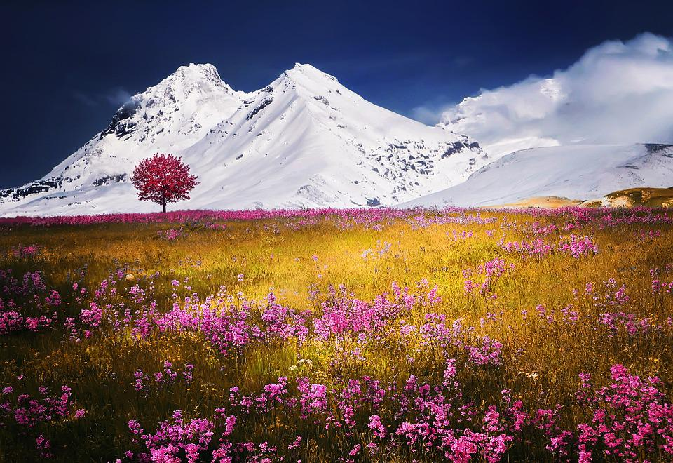 Alps, Tree, Snow, Nature Landscape Flowers Grass