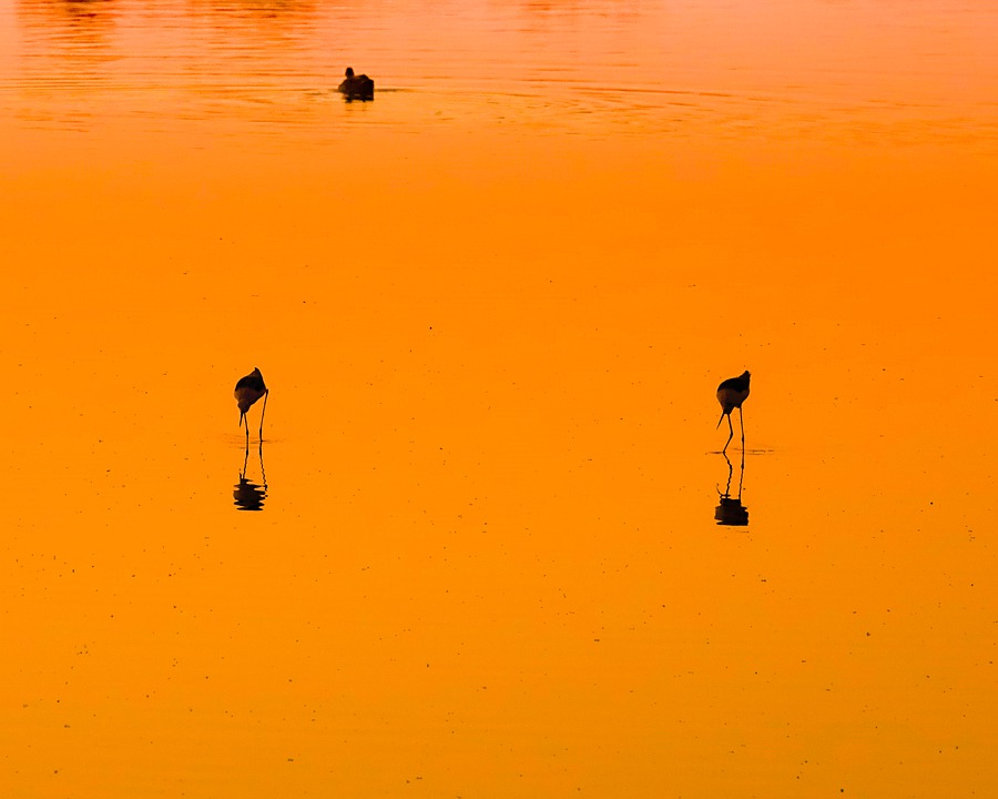 Bird, Lake, Evening, Pond, Sunset, Ambience, Mood
