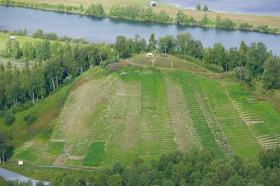 Potato Hill, Ammarnäs, Sweden, Culture Of Potato