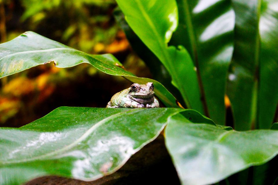 Animals, Frog, Toad, Green, Pond, Amphibians, Nature