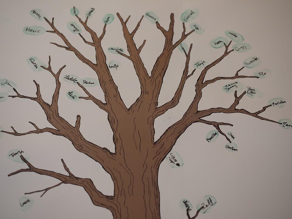 Tree, Family Tree, Branch, Tribe, Ancestry, Friends