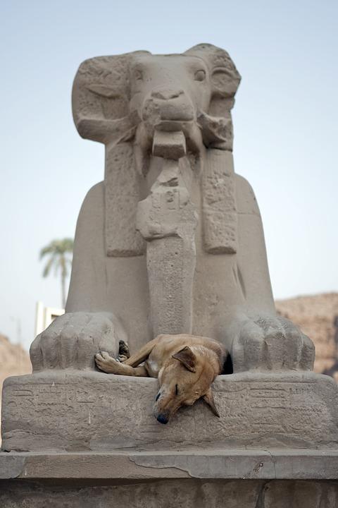 Feral Dog, Sleeping, Dog, Egypt, Aswan, Ancient