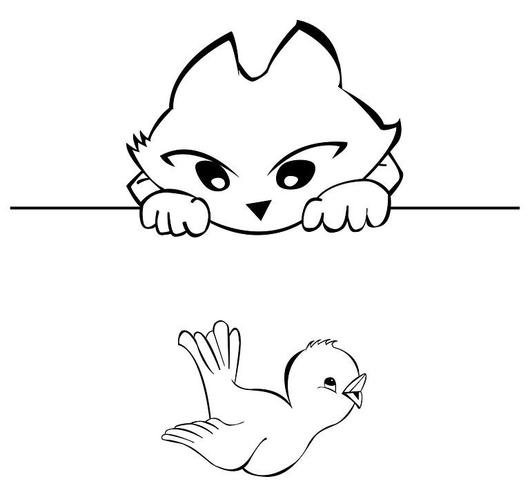 Cat, And, Bird