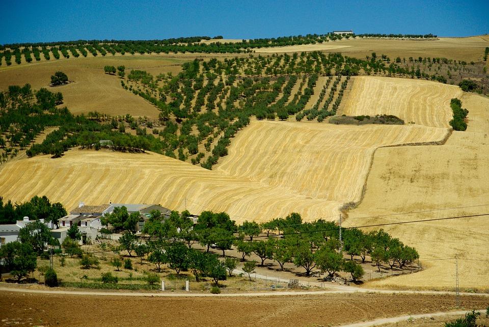 Andalusia, Spain, Olive Trees, Hacienda