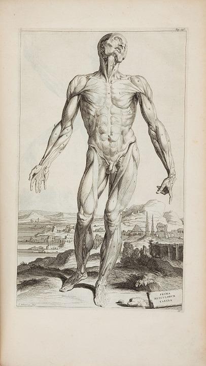 Andreas Vesalius, 1725
