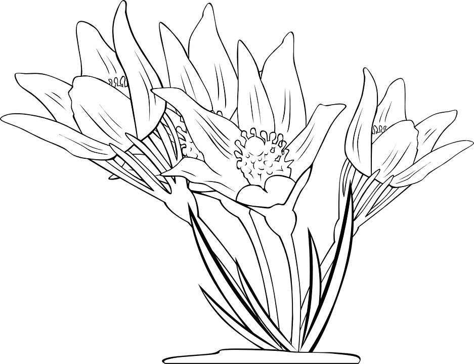 Anemone, Flowers, Plant, Flora