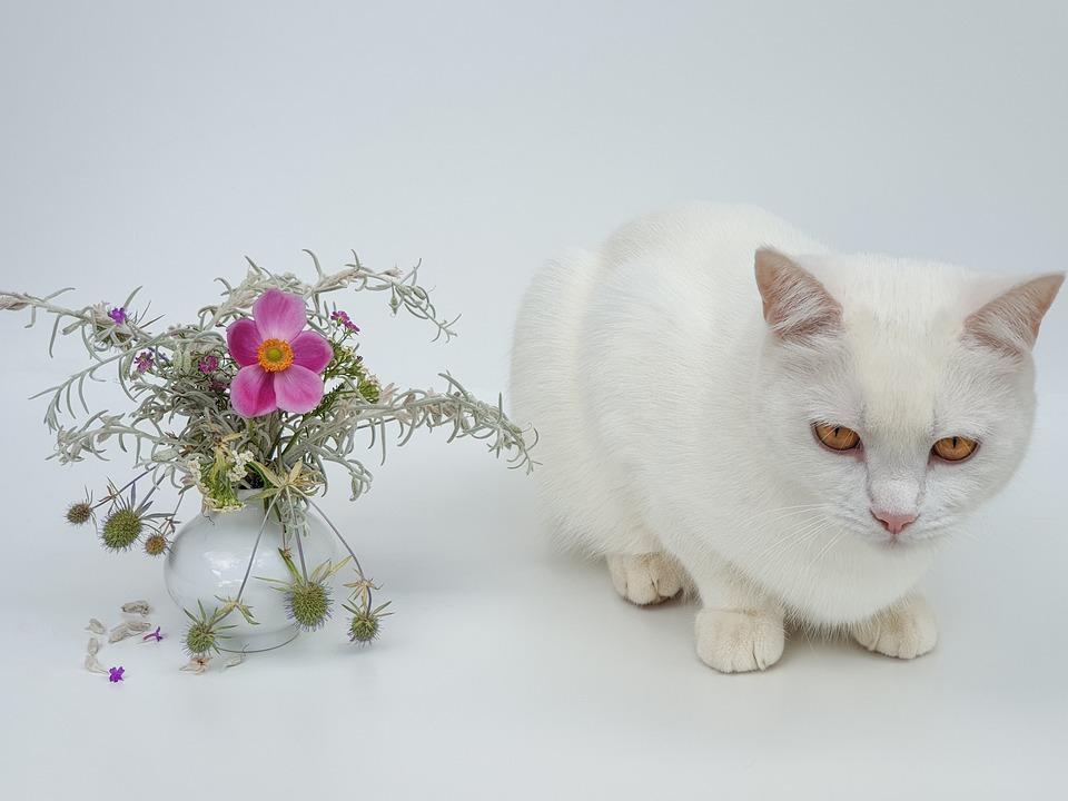 Mini Bouquet Of Flowers, Anemone Pink, Tender, Romantic