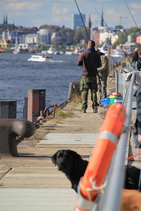 Hamburg, Water, Angler, Fish, Dog, City
