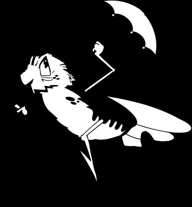 Umbrella, Angry, Bug, Running, Wings