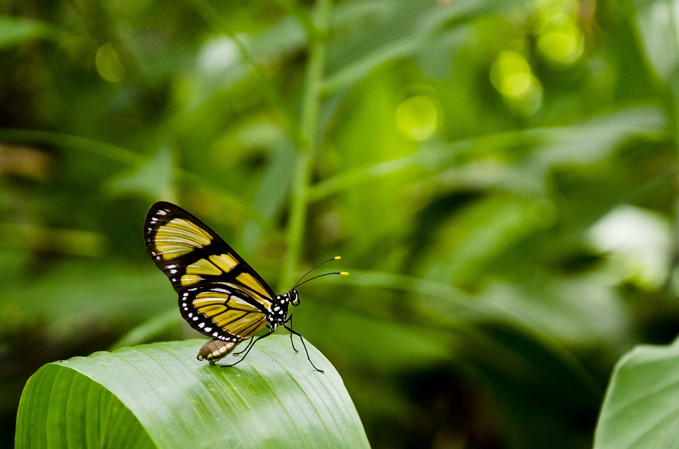 Butterfly, Leaf, Anima, Nature, Plants, Green