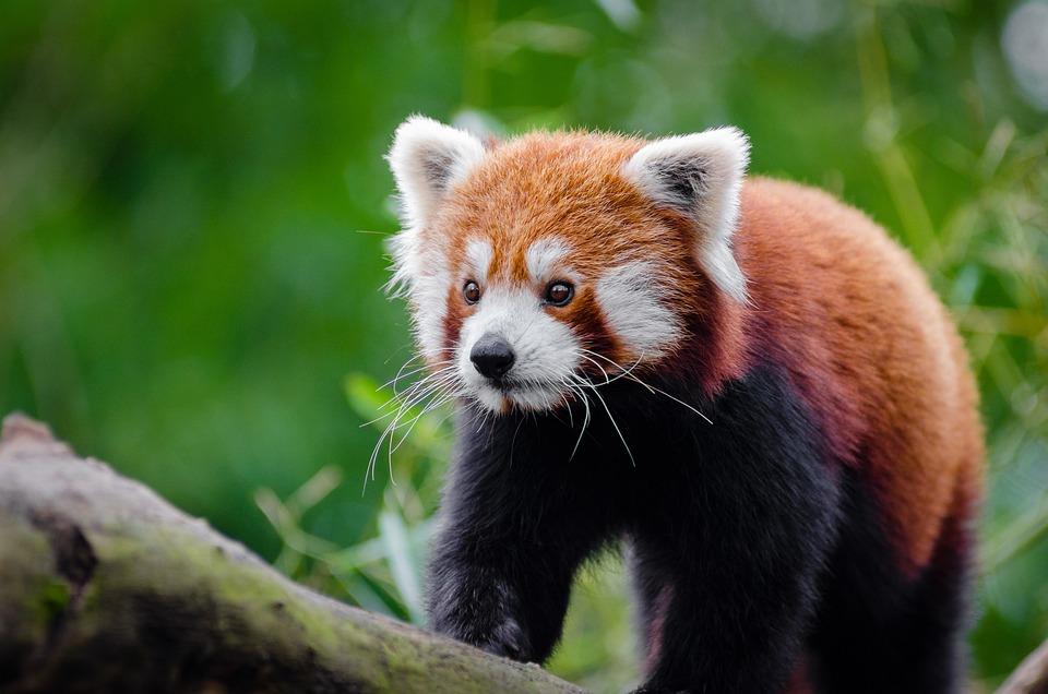 Adorable, Animal, Animal Photography, Blur, Blurry