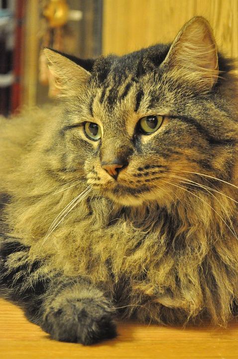 Cat, Kitten, Animal, Feline, Adorable, Mammal