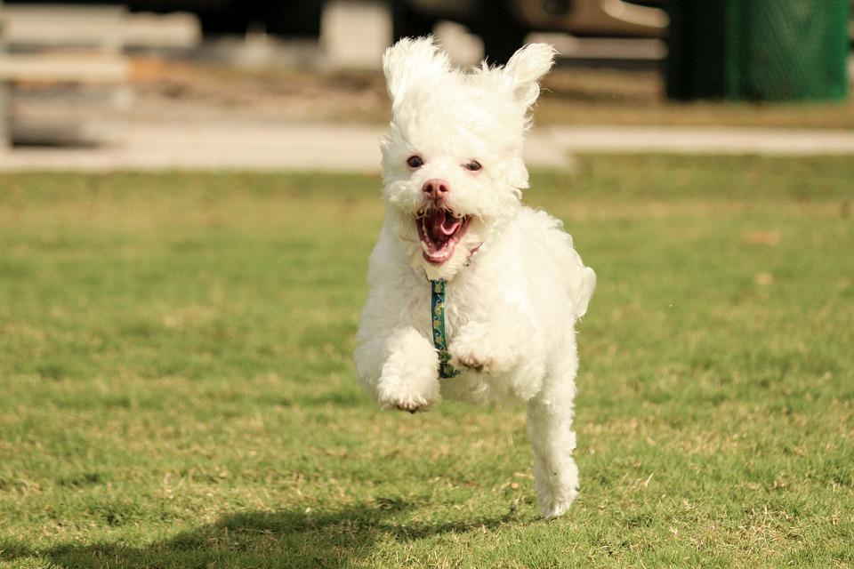 Adventure, Dog, Running Dog, Pet, Animal, Friend