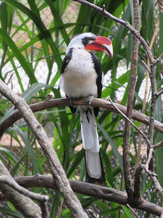 Bird, Hornbill, Bill, Nature, Animal, Africa, Zoo