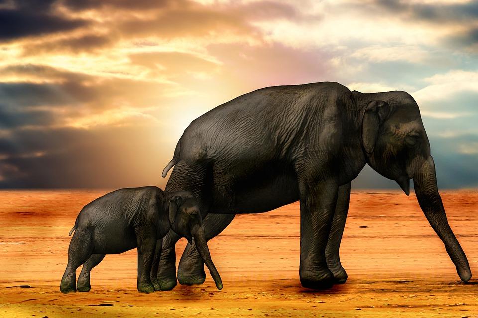 Elephant, Africa, Sun, Animal, African Bush Elephant