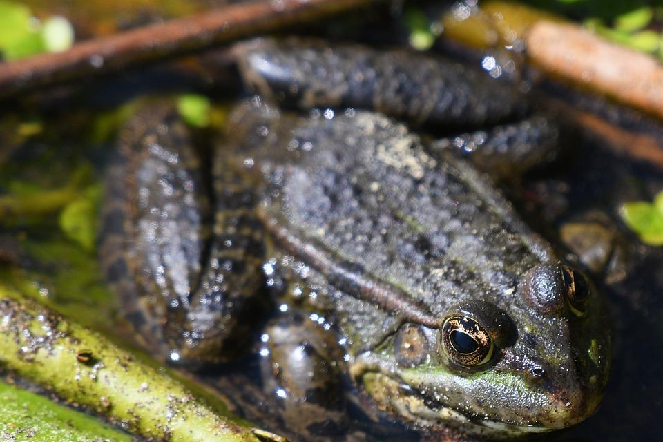 Nature, Amphibian, Animal, Frog, Animal World, Reptile
