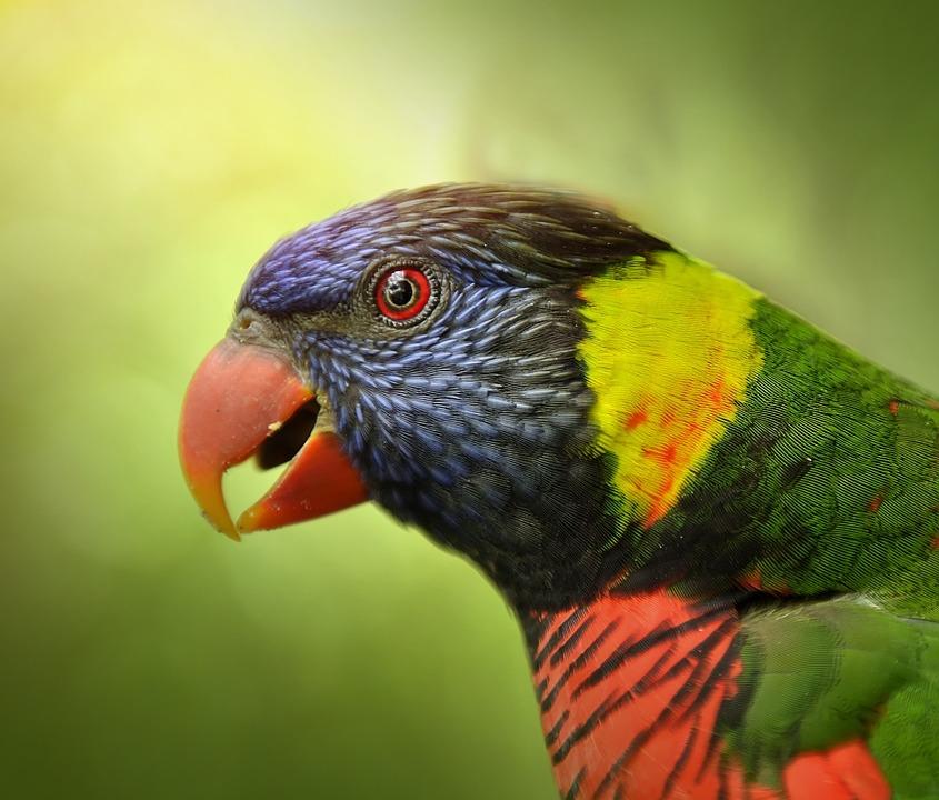 Animal, Adorable, Amusing, Avian, Aviary, Beak, Blue