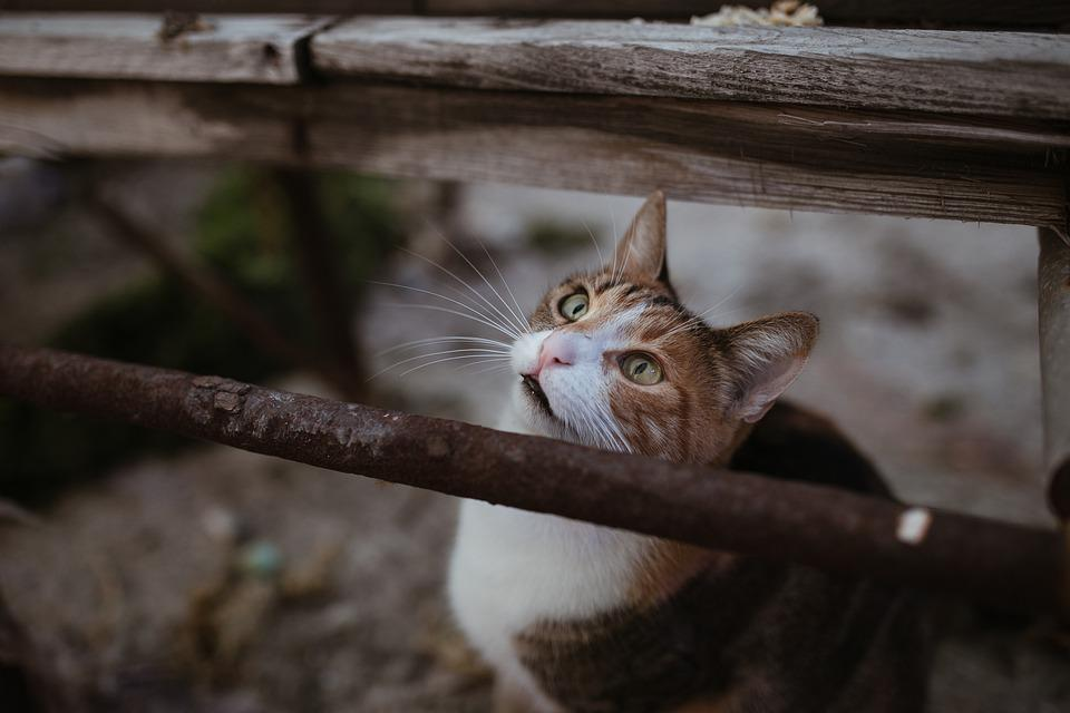 Cat, Animal, Cute, Park, Sweet, Animal Portrait, Pet