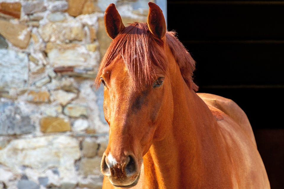 Horse, Animal World, Animal, Reitstall, Ride, Brown