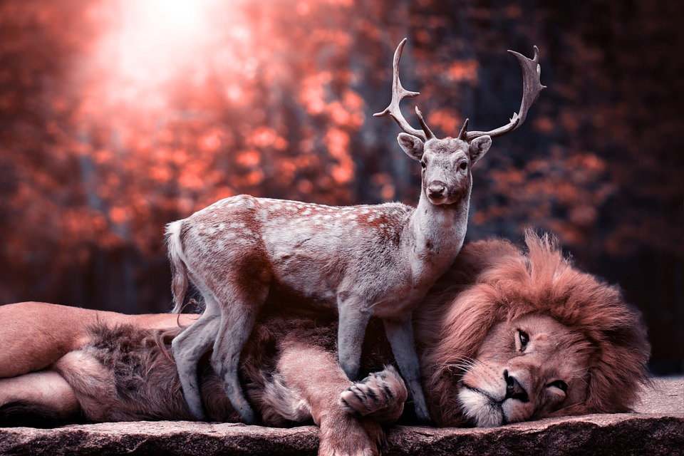 Lion, Predator, Mammal, Nature, Animal, Animal World