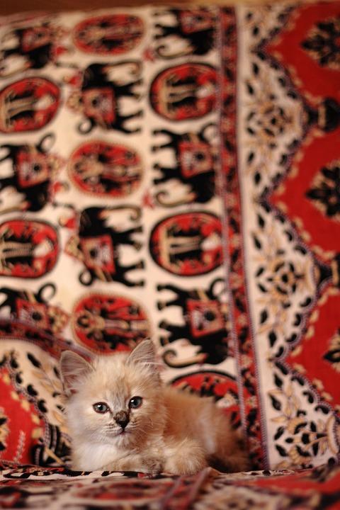Kitten, Cat, Baby, Small, Pet, Animal, Pets, Animals