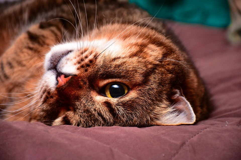 Cat, Feline, Animal, Animals, Felines, Pet, Nature