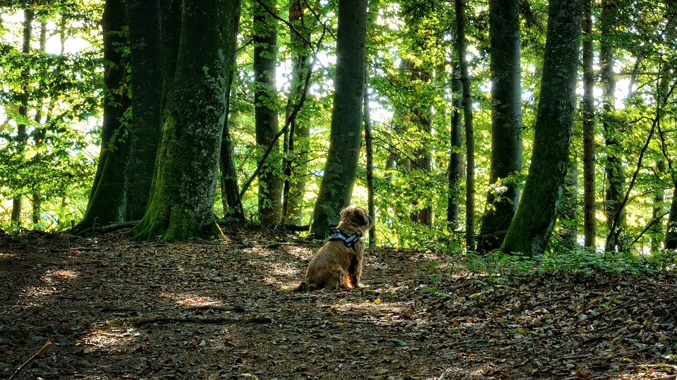 Dog, Animal, Forest, Mixed Forest, Autumn, Rest, Silent