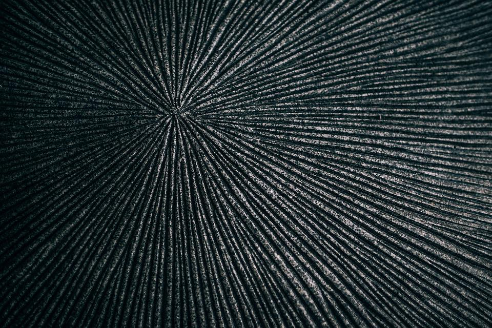 Animal, Background, Black, Clams, Conch, Dark, Design